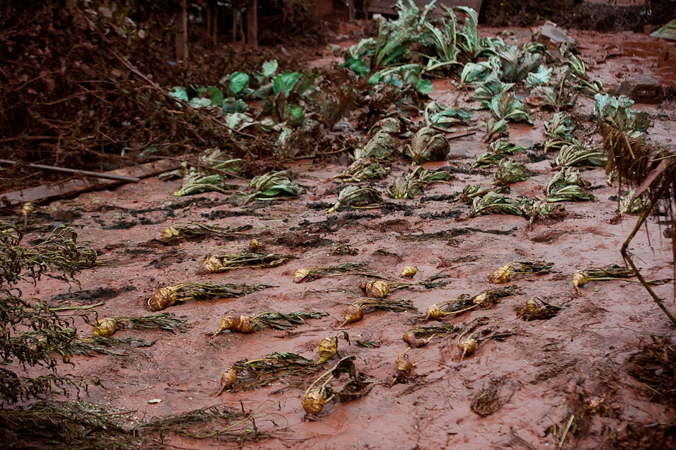 Oda a termés. / The flood destroyed the crops as well.